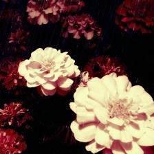 Foto COrtada con Instagram + Filtro. Editada con Pixlr-o-Matic + nuevo filtro de Intagram.