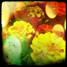 Foto cortada con Instagram + filtro. Editada con Pixlr-o-Matic.