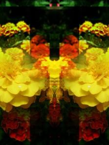 Cortada con Instagram + Filtro. Editada con PicsArt.